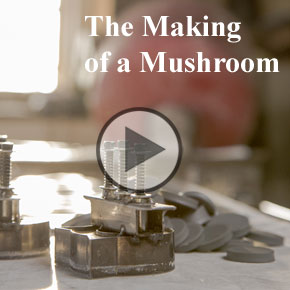Making-of-a-Mushroom