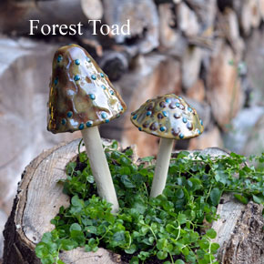 Forest-Toad