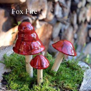 fox+red